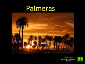 palmeras-121204180429-phpapp02