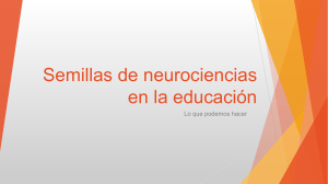 Semillas de neurociencias en la educación